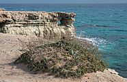 Cape Greco 2010 05 01 5228.jpg