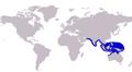 Carangoides talamparoides distribution.PNG