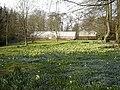 Carpet of Spring Flowers Wydale Hall - geograph.org.uk - 1424262.jpg