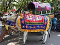 Cart-5-cubbon park-bangalore-India.jpg