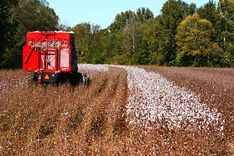 Cotton production in the United States - Cotton harvester in Mississippi (2007)
