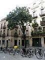 Castanyer d'índies de la plaça Sant Joaquim.jpg