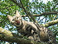 Cat in a tree.jpg