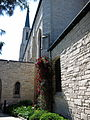 Cathedral of the Immaculate Conception (Fort Wayne, Indiana) - exterior, rose bush.jpg