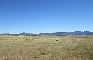San Rafael Valley - Image: Cattle Grazing In San Rafael Valley Arizona 2014