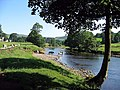 Cattle drinking in the River Wharfe - geograph.org.uk - 1389855.jpg