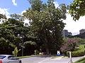 Centro Medico Docente La Trinidad (CMDLT) 2012 041.jpg