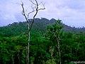 Cerro Bonito, Siuna, RAAN. Nic. - panoramio.jpg