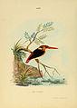 Ceyx Tridactyla Red headed Kingfisher.jpg