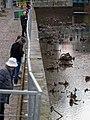 Chômage du canal Saint-Martin 2016-01-06 23.jpg