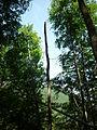 Chablis cassé en hêtraie de Bethmale (Ariège).JPG