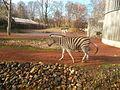 Chapman-Steppenzebra (Equus quagga chapmani) (Zoo Dresden).JPG