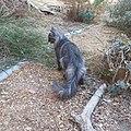 Chat croisé angora persan.jpg