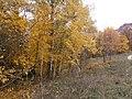 Cherkas'kyi district, Cherkas'ka oblast, Ukraine - panoramio (318).jpg
