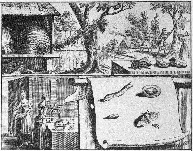 File:Chodowiecki Basedow Tafel 8 a.jpg