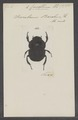 Circellium - Print - Iconographia Zoologica - Special Collections University of Amsterdam - UBAINV0274 019 02 0021.tif