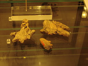 History of the Åland Islands - Ritual, stone age, clay, bear paws from the Åland islands.
