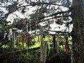 Clootie tree, Kildare.jpg