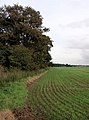 Clough Plantation, south of Winestead - geograph.org.uk - 266041.jpg