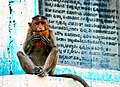 Coconut hoarder (5581380472).jpg
