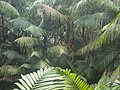 Colônia Terra Nova, Manaus - AM, Brazil - panoramio (9).jpg