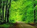 Colour of springtime - Flickr - Stiller Beobachter.jpg