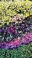 Colours of leaf.jpg