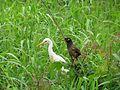 Combo Bird.jpg