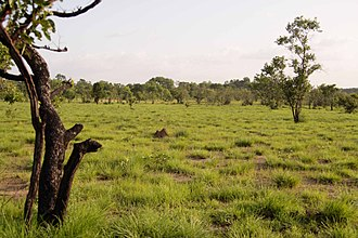 Comoé National Park - Savannah in the Comoé National Park