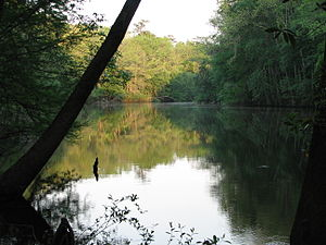 Weston Lake in Congaree National Park, South C...
