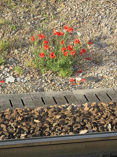 File:Coquelicots en gare de Vaires-sur-Marne.jpg