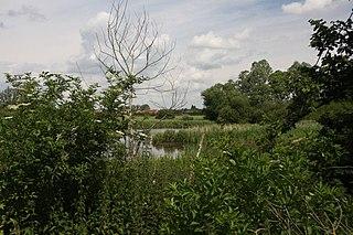 Cornard Mere Suffolk Wildlife Trust nature reserve