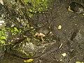 Costa Rica (6110122707).jpg