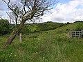 Crockanivore Townland - geograph.org.uk - 850695.jpg