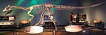 Antarctica-Geological history and palaeontology-Cryolophosaurus skeleton mount FMNH