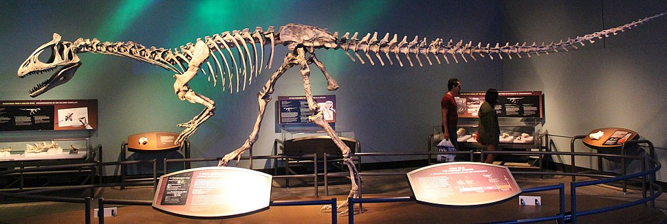 Cryolophosaurus skeleton mount FMNH