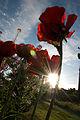 Cypress Community Garden, Vancouver (4674343308).jpg