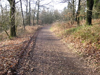 Dörenberg - Hiking trail by the Hermann's Tower