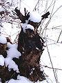 Dřevěná-panda4.jpg