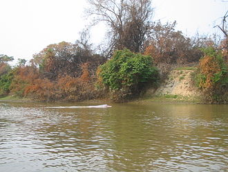 Amazon river dolphin - The Bolivian river dolphin is a subspecies of Inia geoffrensis