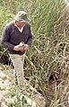 David Noble Robins puts Terrapin in river near jerez (37086611663).jpg