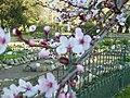 Day trip to the Botanical Gardens - panoramio (38).jpg