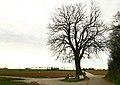 De Schonenboom ,opgaande linde - 375958 - onroerenderfgoed.jpg