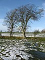 Deciduous trees - geograph.org.uk - 649795.jpg