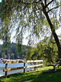 Deep Cove, 7 sept 2008, 4.jpg