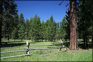 Ochoco Mountains - Ponderosa pine forest in the Deep Springs area