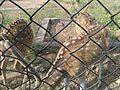 Deer Park at Kinnerasani Dam, Khammam, Telangana State 11.jpg