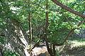 Demir Kapija Canyon16.JPG