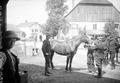Der Tierarzt bei der Pferdeuntersuchung - CH-BAR - 3237307.tif