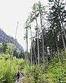 Der Wanderer und die visuelle Naturüberfultung in der Sächsischen Schweiz.jpg